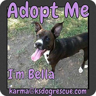Boxer Mix Dog for adoption in Cheney, Kansas - Bella