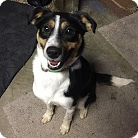 Adopt A Pet :: Jocko - Hamilton, ON