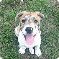 Adopt A Pet :: Jake - Pequot Lakes, MN