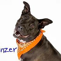 Adopt A Pet :: PANZER - Sacramento, CA