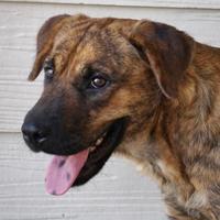 Adopt A Pet :: Miss Prissy - Toccoa, GA