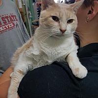 Adopt A Pet :: Derek - Columbus, OH