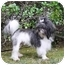 Photo 3 - Shih Tzu Mix Dog for adoption in Newport Beach, California - KING