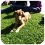 Photo 1 - Terrier (Unknown Type, Medium)/Feist Mix Dog for adoption in Baton Rouge, Louisiana - Olivia