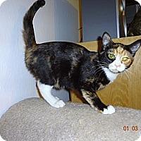 Adopt A Pet :: Sally - Saint Albans, WV