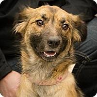 Adopt A Pet :: Samantha - Saskatoon, SK