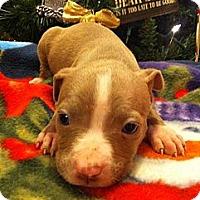 Adopt A Pet :: Kanga - Roaring Spring, PA