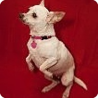 Adopt A Pet :: Pearl - Corona, CA