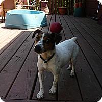 Adopt A Pet :: Kes - Wisconsin Dells, WI