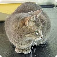Adopt A Pet :: Pia - Pineville, NC