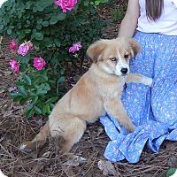 Adopt A Pet :: Penny *VIDEO* - Columbia, SC