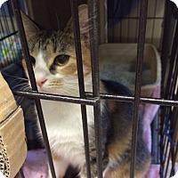 Adopt A Pet :: Calista - Byron Center, MI