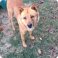 Adopt A Pet :: Oliver - Los Angeles, CA