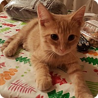 Adopt A Pet :: sunnie - brewerton, NY