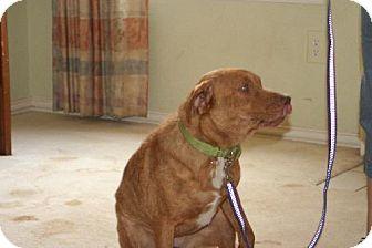 Labrador Retriever/Shar Pei Mix Dog for adoption in Alvarado, Texas - Jewell