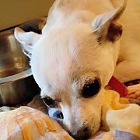 Adopt A Pet :: Logan - Elizabethtown, PA