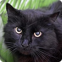 Adopt A Pet :: Blackie - Englewood, FL