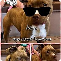 Adopt A Pet :: Alexa - Las Vegas, NV