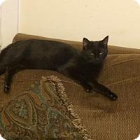Adopt A Pet :: Abby - Acushnet, MA