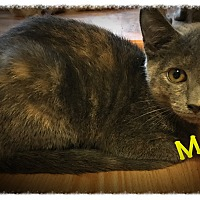 Adopt A Pet :: Marsh - Cleveland, TN