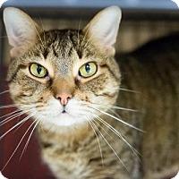 Adopt A Pet :: Juice - St. Paul, MN