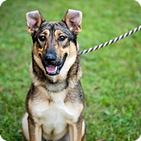 Adopt A Pet :: Pence - Cambridge, ON