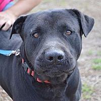 Adopt A Pet :: Judd - Seabrook, NH