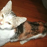 Adopt A Pet :: Pheonix - Goldsboro, NC