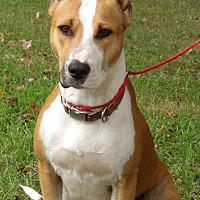 Adopt A Pet :: Little Bit (60 lb) GREAT Dog - Williamsport, MD