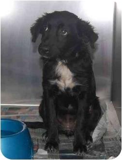 Spaniel (Unknown Type) Mix Puppy for adoption in Inman, South Carolina - Miranda