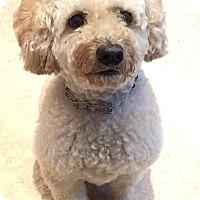 Adopt A Pet :: MAISON - East Hanover, NJ