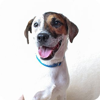 Terrier (Unknown Type, Medium) Mix Dog for adoption in Wilmington, Delaware - Baxter