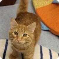 Adopt A Pet :: Carrot - El Cajon, CA