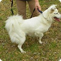Adopt A Pet :: Dancer - Bartlett, TN