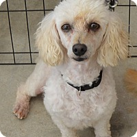 Adopt A Pet :: Ava - Prole, IA