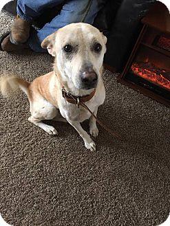 Golden Retriever Mix Dog for adoption in Cream Ridge, New Jersey - Tut