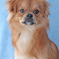 Adopt A Pet :: Newport - Encinitas, CA