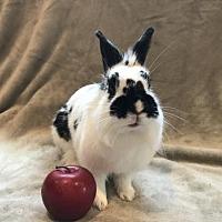 Adopt A Pet :: Darby - Columbus, OH