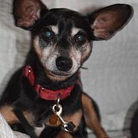 Adopt A Pet :: Jack - Rockville, MD