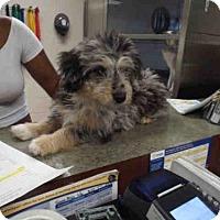 Adopt A Pet :: LIV - Pearland, TX