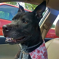 Adopt A Pet :: Raven - Troutville, VA