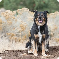 Adopt A Pet :: Daisy - Washoe Valley, NV