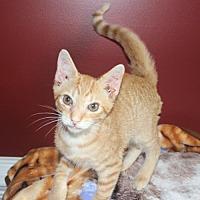 Adopt A Pet :: Jack (& Chrissy, Janet) - Herndon, VA