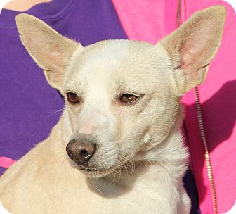 Papillon/Terrier (Unknown Type, Small) Mix Dog for adoption in Pewaukee, Wisconsin - Butterbean