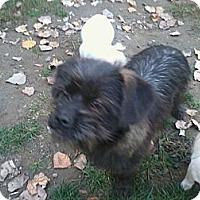 Adopt A Pet :: Elsie - Seattle, WA