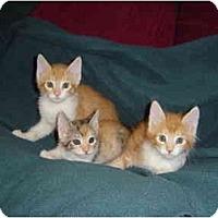 Adopt A Pet :: Riley - Modesto, CA