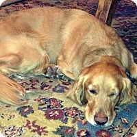 Adopt A Pet :: Gunner - Courtesy Posting - New Canaan, CT