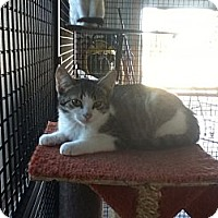 Adopt A Pet :: Grizzly - Hamilton, ON