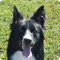 Adopt A Pet :: Maya - Huntingburg, IN