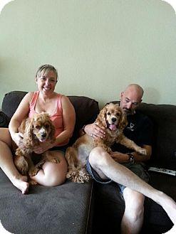 Cocker Spaniel Mix Dog for adoption in Phoenix, Arizona - Tina